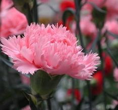Blumenriviera