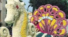 Blumenzucht in Ligurien