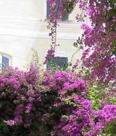 Blumenzucht Ligurien